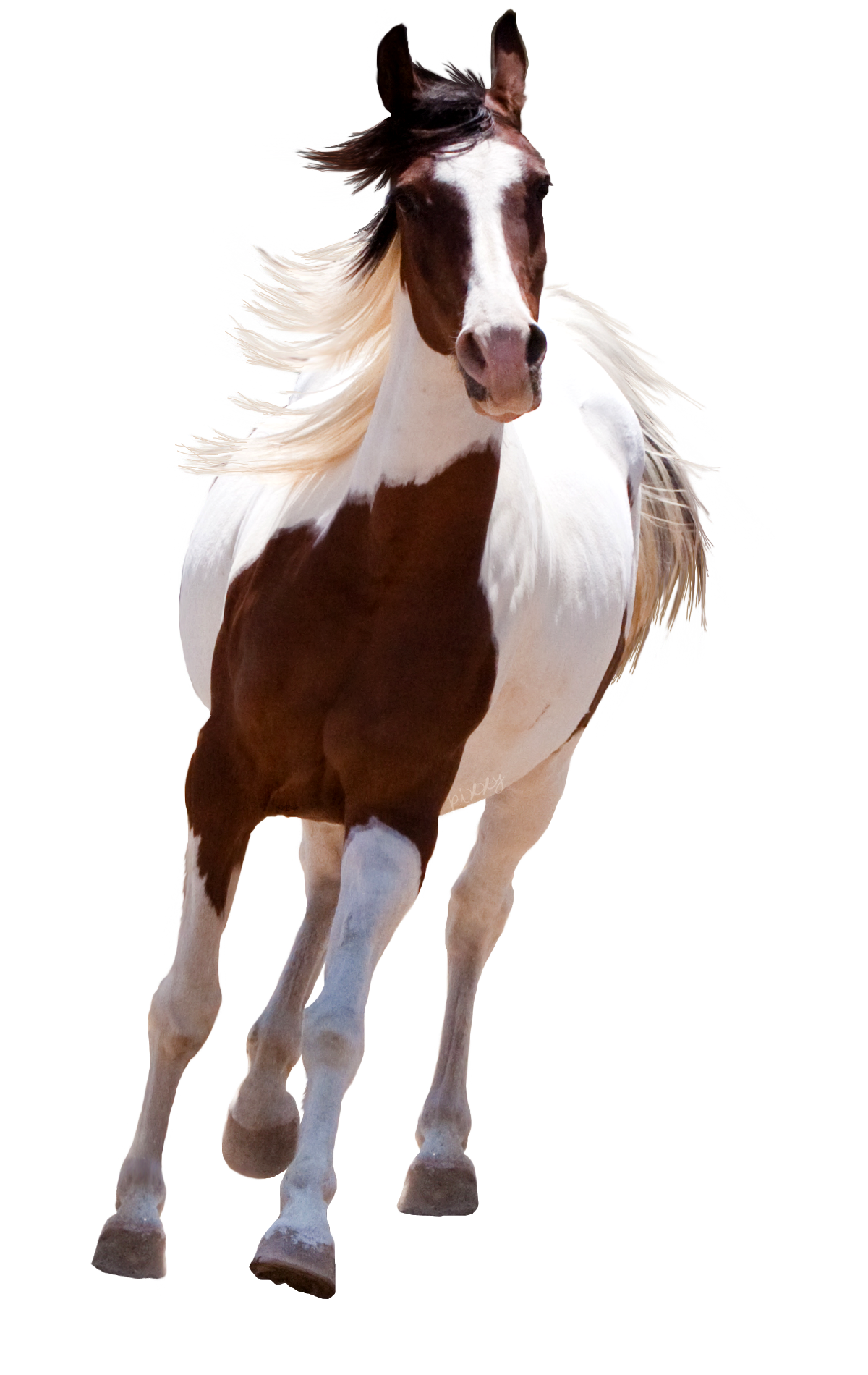running horse png runing horse png on land standing horse Running Horse Png