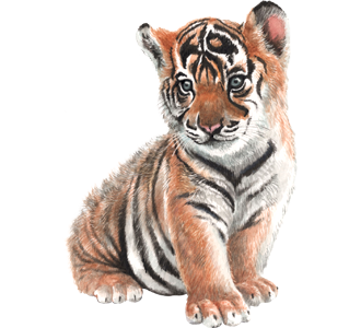 hd baby tiger png  cub tiger clipart png free White Tiger Clip Art Free Free Tiger Logo