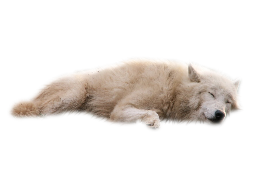 laying  sleeping wolf white cut out png transparent free clipart wolf paw print free wolf face clipart