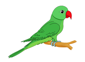 Parrot PNG images and Clipart free download