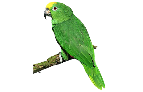 Green parrot png images free download