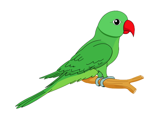 hd quality flying parrot clipart png images free