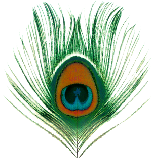 Peacock feather krishna png - photo#38