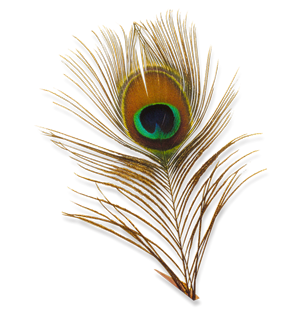 Peacock feather krishna png - photo#31