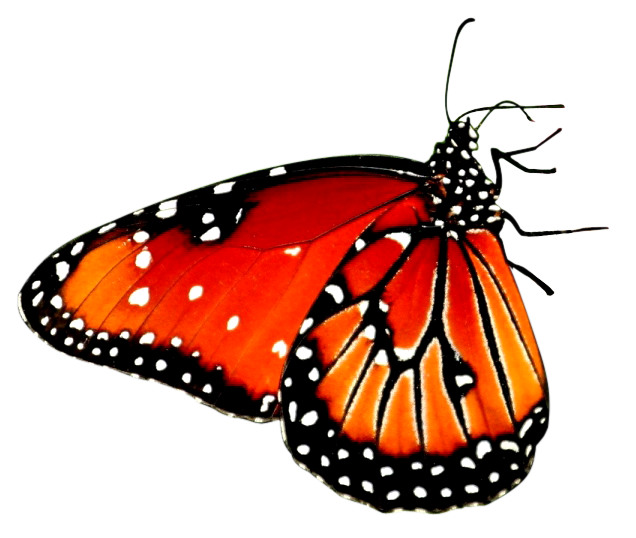 Flower Sitting Butterfly Png Image Transparent Background