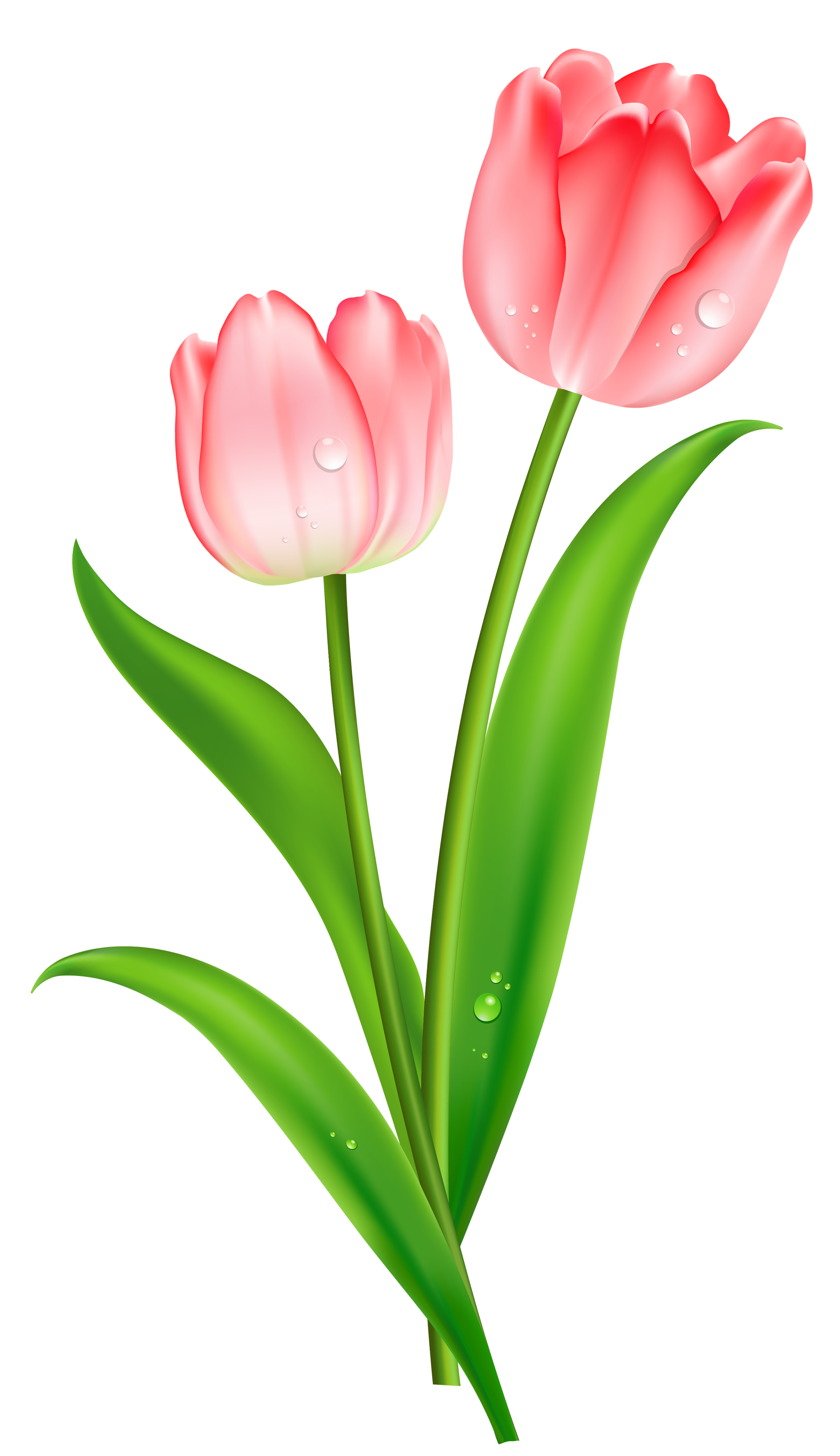 tulip clipart png images free from pngimagesfree com rh pngimagesfree com tulip clipart free black and white Tulip Clip Art