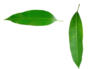 Leaf Png Leaves Png Images Download Free 19,460 transparent png illustrations and cipart matching leaves. free png images