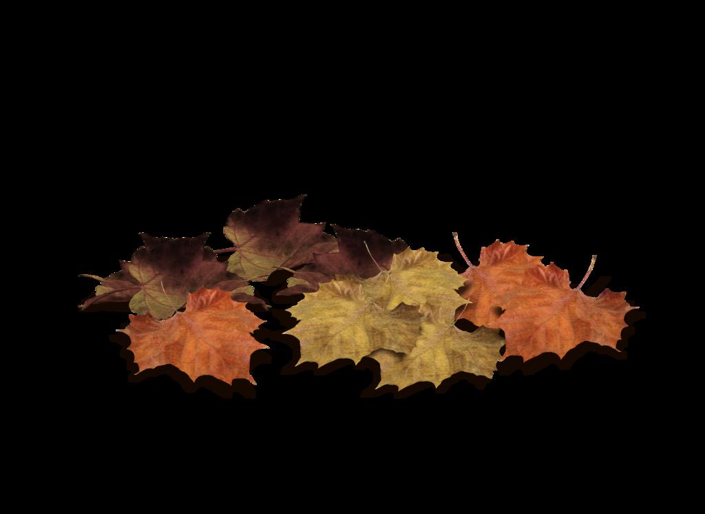 leaf png image fall on land download free