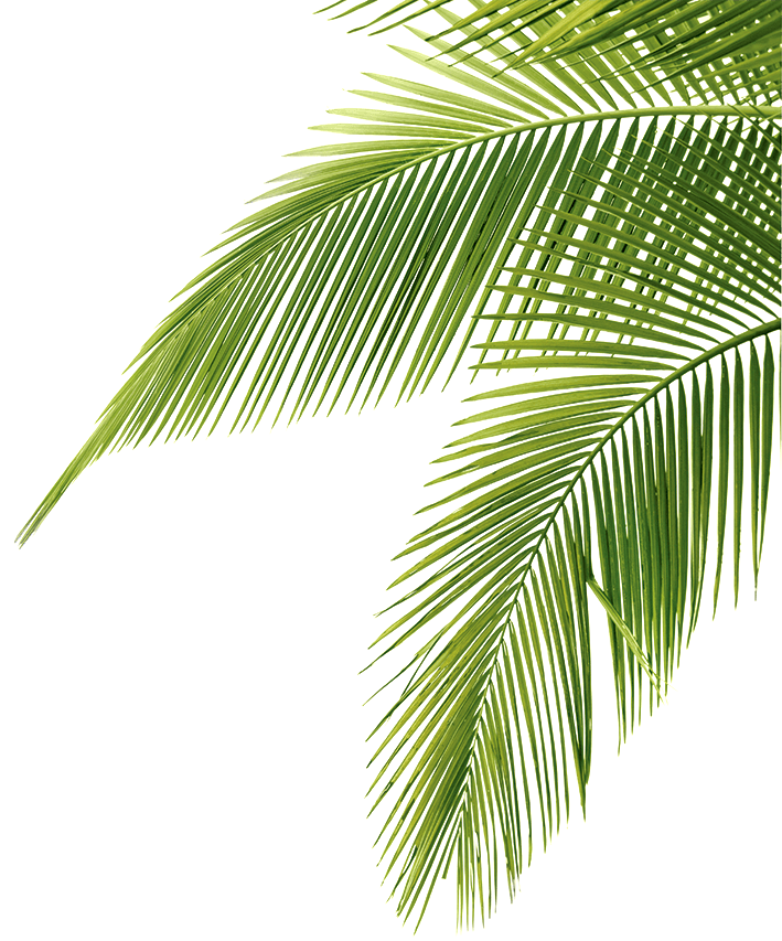 palm tree frounds transparent picture Printable Palm Tree Leaves Palm Tree Leave Art